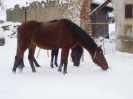 leden 2010_1
