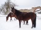 leden 2010_3