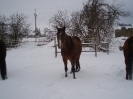 leden 2010_4