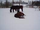 leden 2010_6