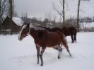leden 2010_8